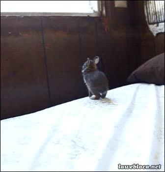 Enlace a Este salto no es nada para un conejito como yo...