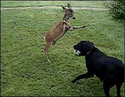 Enlace a ¡Que no Bambi, que no seas pesado, no te doy la pelota!