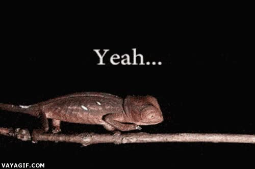 Enlace a No hay nada más indeciso que un camaleón
