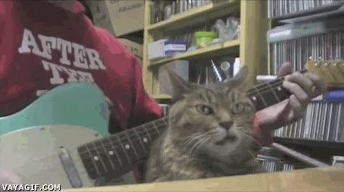 Enlace a No sé si la cara de este gato es de cabreo o de disfrutar la música