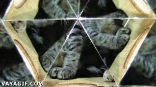 Enlace a El gatoleidoscopio