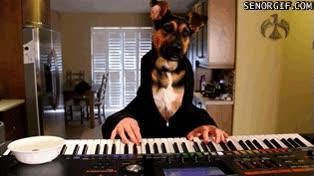 Enlace a Este perro sí que tendría que llamarse Beethoven
