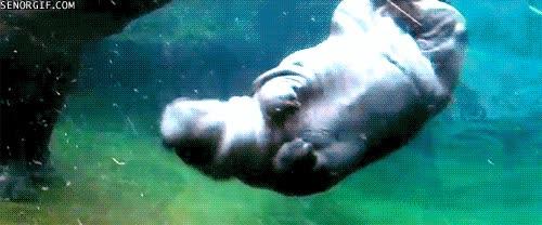 Enlace a ¿Gorda yo? Perdona pero en el agua soy más grácil y elegante que tú