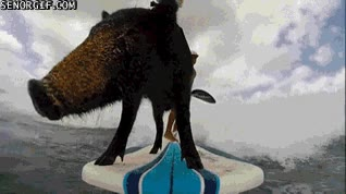 Enlace a El cerdo surfista