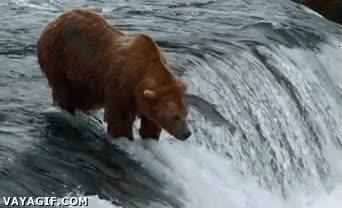 Enlace a La venganza del salmón