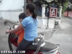 Enlace a Podría caminar, pero teniendo unos amos con moto...