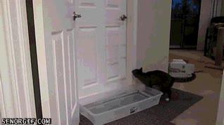 Enlace a ¿Realmente pensabas que un cubo con agua iba a impedirme abrir la puerta?