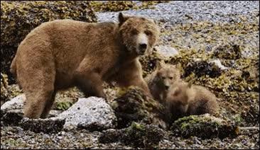 Enlace a ¡Cuidado mamá oso, que te cargas a tu cría!