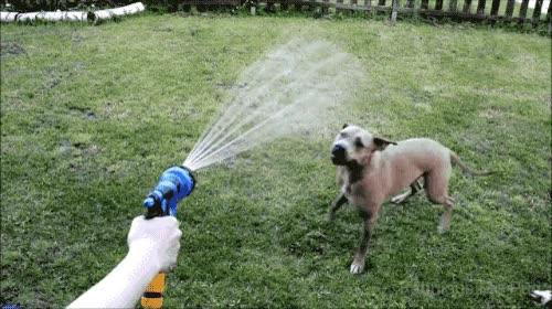 Enlace a Perros que se pueden tirar horas intentando morder algo que es físicamente imposible morder