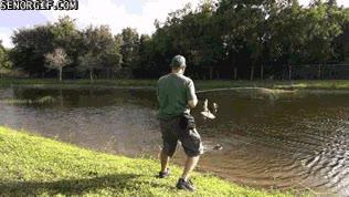Enlace a Nueva disciplina de pesca, usando caña y halcón