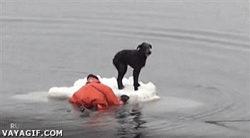 Enlace a Perrete indefenso atascado en placa de hielo es rescatado