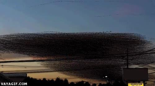 Enlace a Huída de pájaros de un cable a cámara lenta