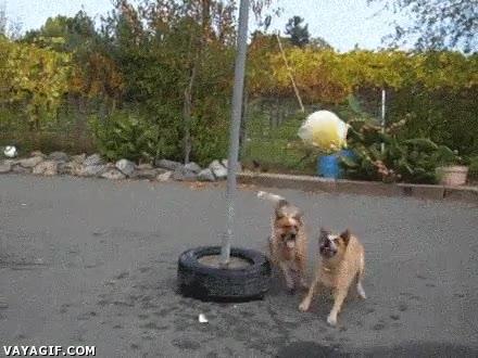 Enlace a ¿Quieres entretener a 2 perros toda una tarde? Aquí está la solución
