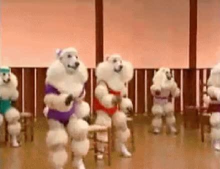 aerobic,caniches,gracioso,humor,lol,perros