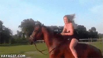 Enlace a Recomendación: No hagas el Ice Bucket Challenge encima de un caballo