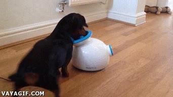 Enlace a Perros autosuficientes que no necesitan ni amo para jugar
