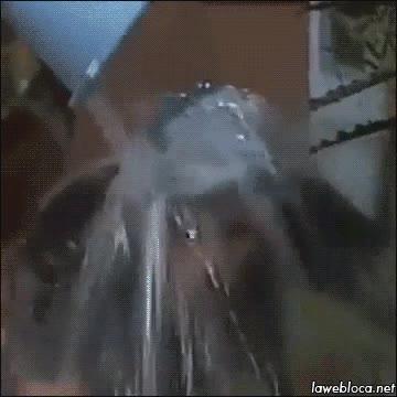 Enlace a Don Ramón ya hacía el Ice Bucket Challenge antes de que fuera mainstream