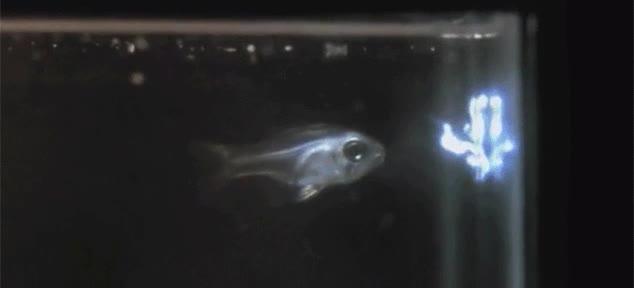 Enlace a Nadie lo sabía, pero Ryu del Street Fighter entrenó a este pez, ¡hadouken!
