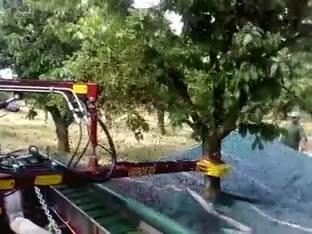 Enlace a Cómo recoger cientos de cerezas en unos pocos segundos