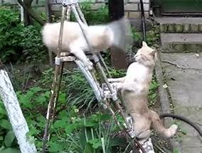 Enlace a Este gato no se deja intimidar tan fácilmente