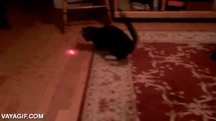 Enlace a Ata un láser a la cabeza de tu gato y tenlo entretenido hasta que se acaben las pilas
