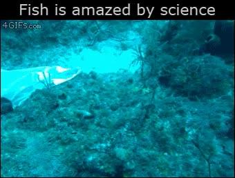 Enlace a Parece que este pez lo flipa con el submarinista