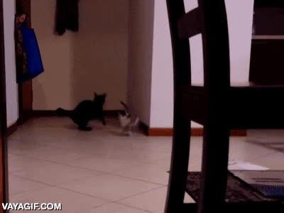 Enlace a No es tan fácil atrapar a un gato cuando lleva muchos años de entrenamiento ninja