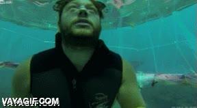Enlace a Una tienda de campaña subacuática