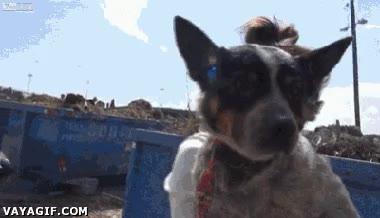 Enlace a Rescatando y adoptando a este perrito abandonado, ¡mirad qué feliz se le ve!