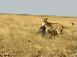 Enlace a Pumba se ha cansado de ser la presa