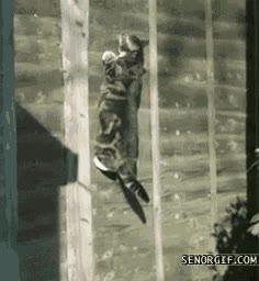 Enlace a La gravedad no afecta a los gatos por igual