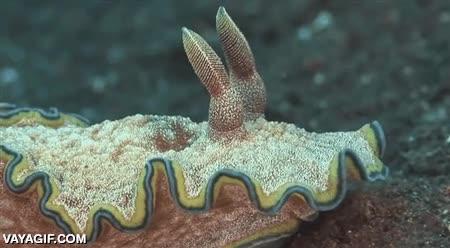 Enlace a Lo que habita en el fondo marino es sencillamente increíble