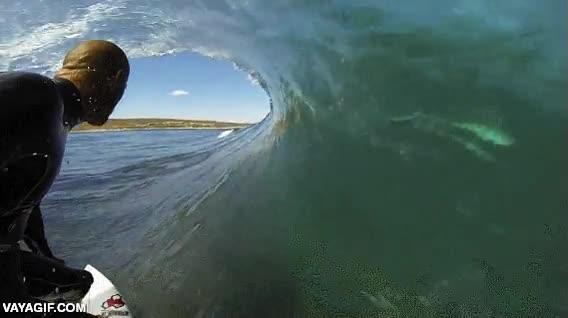 Enlace a Los riesgos del surf, ¿veis el tiburón dentro de la ola?