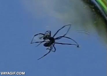 Enlace a Una araña caminando sobre mercurio líquido