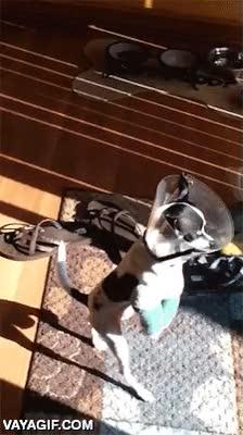 Enlace a Las dos patas delanteras rotas no conseguirán que este perrito no salga a dar su paseo