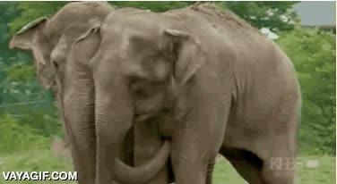 Enlace a Dos elefantes se reencuentran después de 22 años