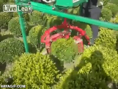 Enlace a ¿Nunca te has preguntado cómo hacen los arbustos totalmente redondos?