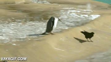 Enlace a No hay nada más fácil que trollear a un pingüino