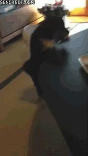 Enlace a El drama de ser un perrito demasiado pequeño o tener una mesa demasiado grande