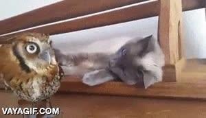 Enlace a Los gatos no pueden ser más trolls