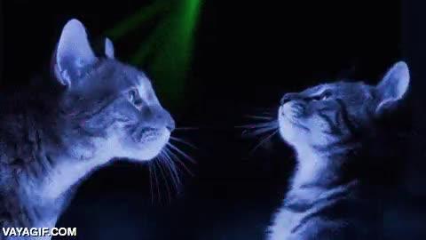 Enlace a Los gatos sí que saben pegarse buenas fiestas