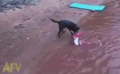 Enlace a El niño sólo quería darse un baño, el perro entendió que se ahogaba y p'afuera