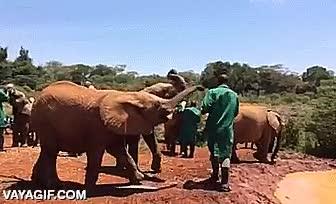Enlace a No hagas enfadar a una cría de elefante que quiere su biberón o sino...