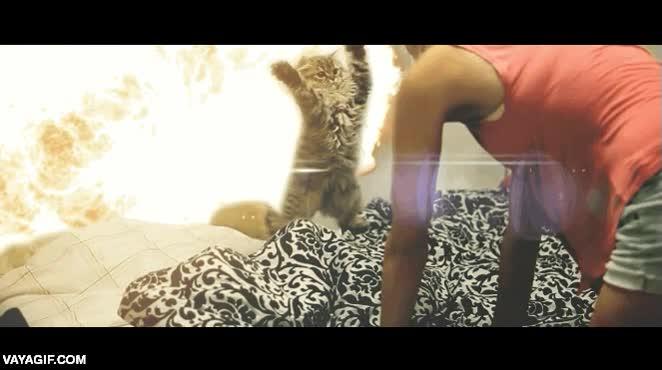 Enlace a El gatito que podría ser una estrella del cine de acción