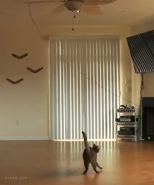 Enlace a Teniendo a tu gato entretenido todo el día