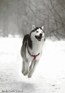 Enlace a Cuando un perro se emociona más de la cuenta, le pasa algo así