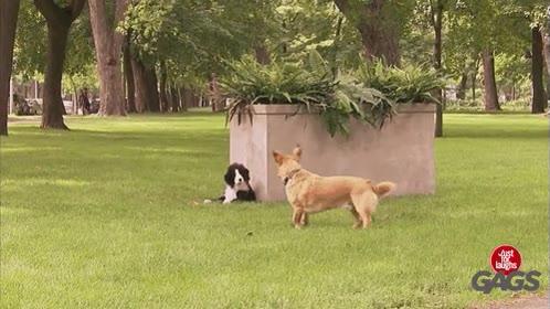 Enlace a A los perros también se les puede hacer bromas de cámara oculta