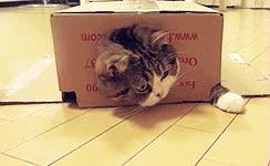 Enlace a El gato que soñaba con ser tortuga