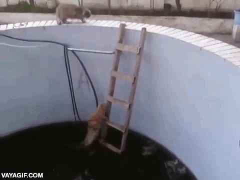 Enlace a Karma instantáneo también en los gatos