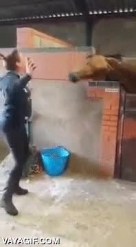Enlace a Los caballos también tienen ritmo